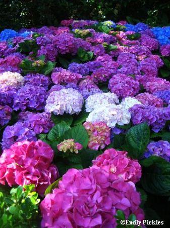 2009 EPCOT Flower & Garden Festival Tea Time