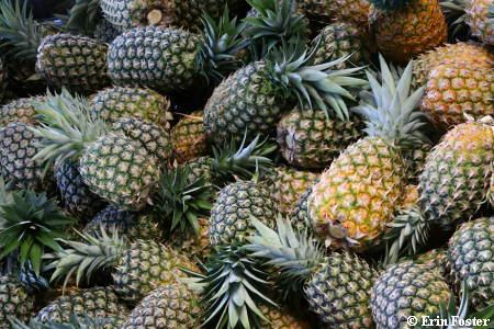 Pineapple Harvest