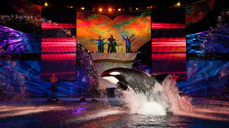 summernights-seaworld.jpg