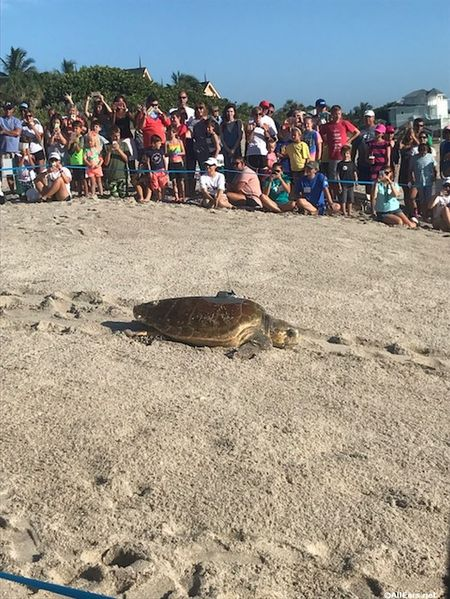 10th Annual Tour De Turtles at Disney's Vero Beach