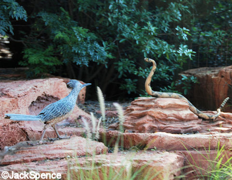 Roadrunner and Rattlesnake