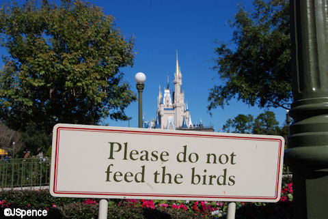 Please Don't Feed the Birds