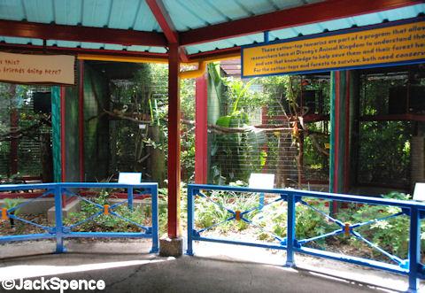 Tamarin Monkey Enclousures