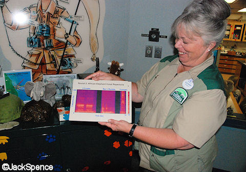 Elephant Vocalizations