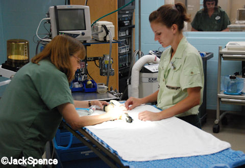 Pigeon Health Check-up