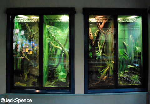 Reptiles, Amphibians, and Invertebrates