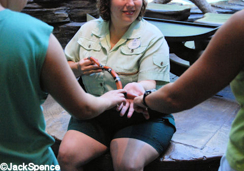 Touching the Scarlet Snake