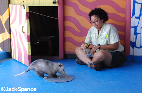 Nikki and Opossum