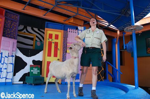Sheep Training