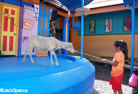 Sheep Training with Child