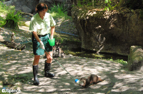 Otter Training