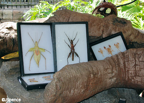 Display Bug