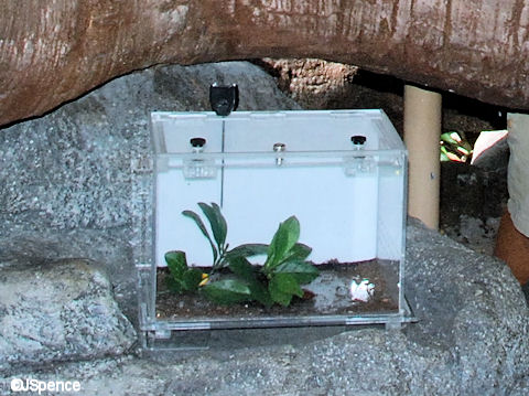 Bug Enclosure