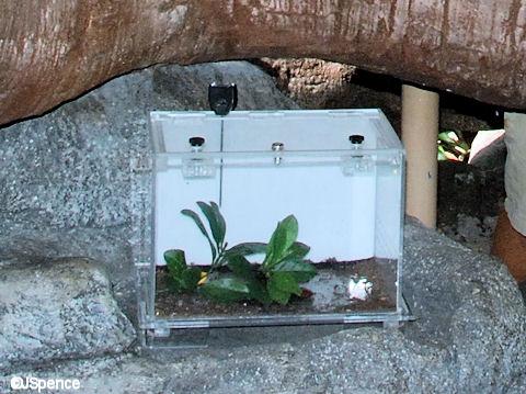 Bug Enclosure