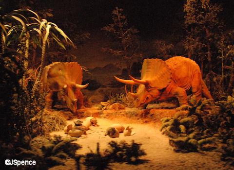 Triceratopses