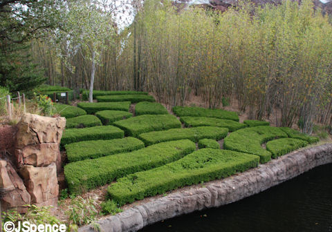 Tea Crop on Mountain Slope