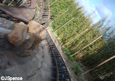 Racing Through the Forest