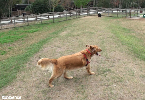Waggin' Trails Dog Park