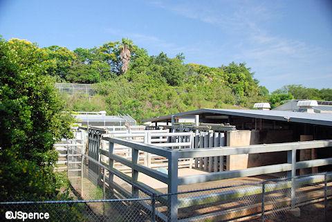 Disney's Animal Kingdom, un parc animalier comme les autres? - Page 2 KilimanjaroSafaris16