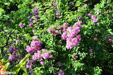 Adventureland Flowers