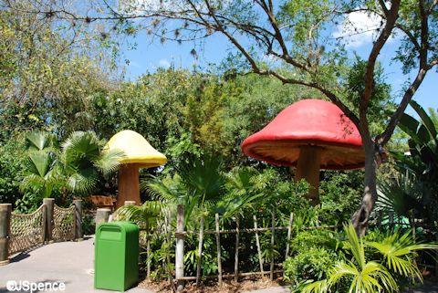 Rain Forest Garden