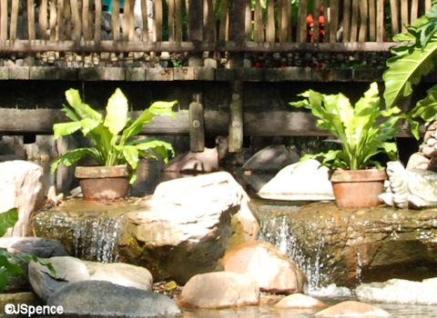 Flame Tree Barbeque Reflecting Pool