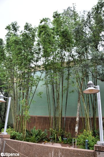 Theater in the Wild