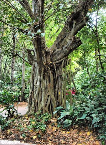 Maharaja Jungle Trek Tree