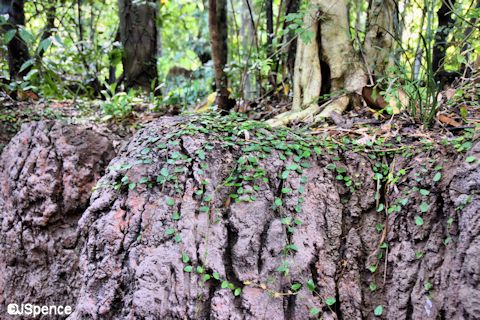 Maharaja Jungle Trek Walkway