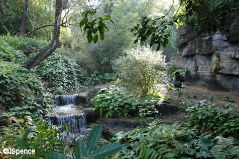 Pangani Forest Exploration Trail