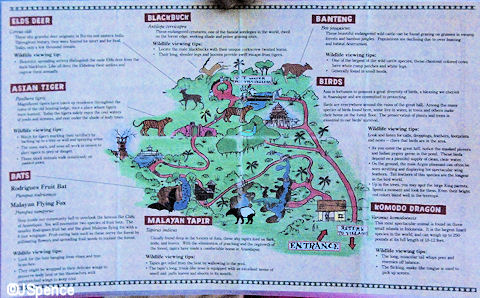 Map & Animal Description Cards