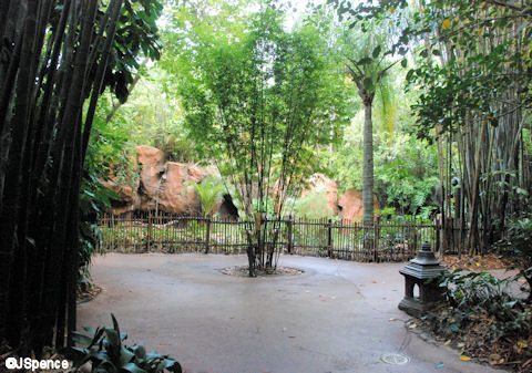 Komodo Dragon Enclosure