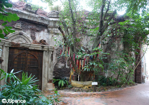 Ancient Coral Tree