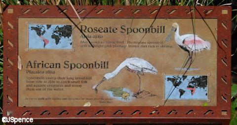 Spoonbill Plaque