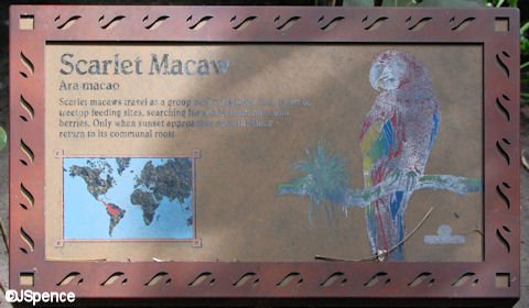 Scarlet Macaw Plaque