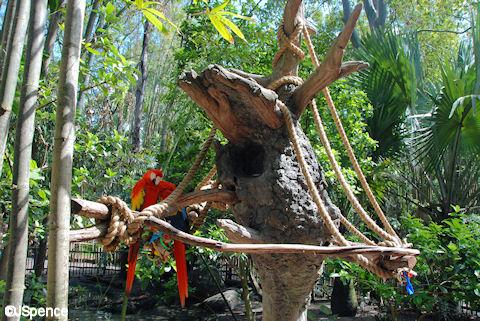 Scarlet Macaw Nest