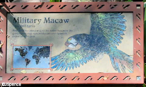 Military Macaw Plaque