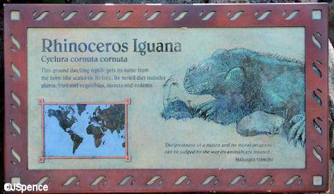 Rhinoceros Iguana Plaque