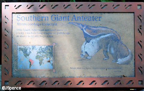 Southern Giant Anteater Plaque