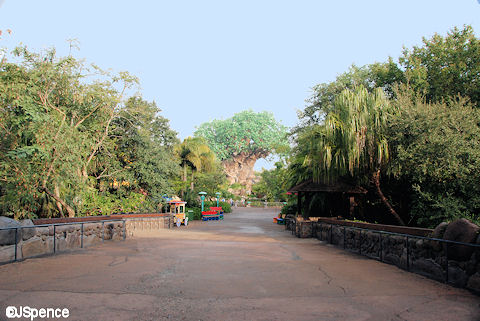 Discovery Island and the Tree of Life