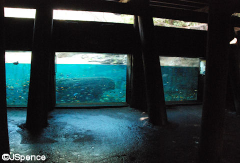 Hippopotamus Viewing Area