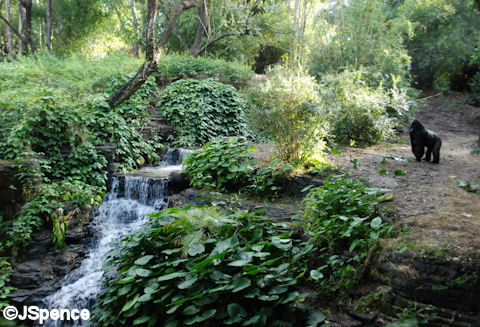 Gorilla Valley