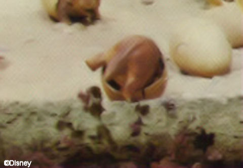 Triceratops Hatching