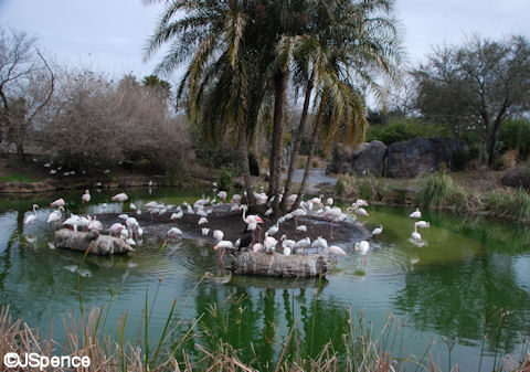 Flamingos and Hidden Mickey