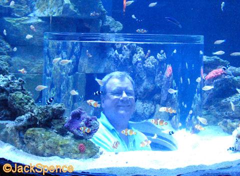 Seaworld Picfind2