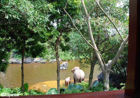 Jungle Cruise as seen from the Train