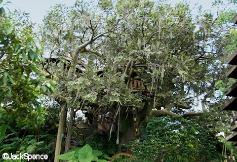 Swiss Family Treehouse 2009