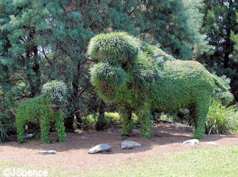 Buffalo Topiary