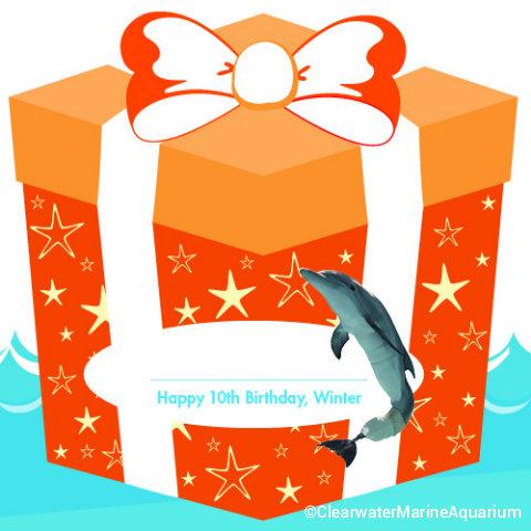 Clearwater-Marine-Aquarium-Winter-Birthday-paper-Present.jpg