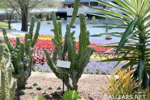 Epcot-flower-garden-Cactus-road-rally-2.jpg